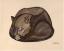 Gaston SUISSE (1896-1988) - Panthère noire lovée.1926.