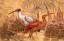 Gaston SUISSE (1896-1988) - Ibis sacré du Nil, ibis rose, dans les caladiums. 1935.