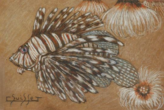 Gaston SUISSE (1896-1988) - Volitan et anémones de mer