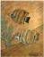 Gaston SUISSE (1896-1988) - Poissons exotiques