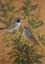 Gaston SUISSE (1896-1988) - Oiseaux branchés